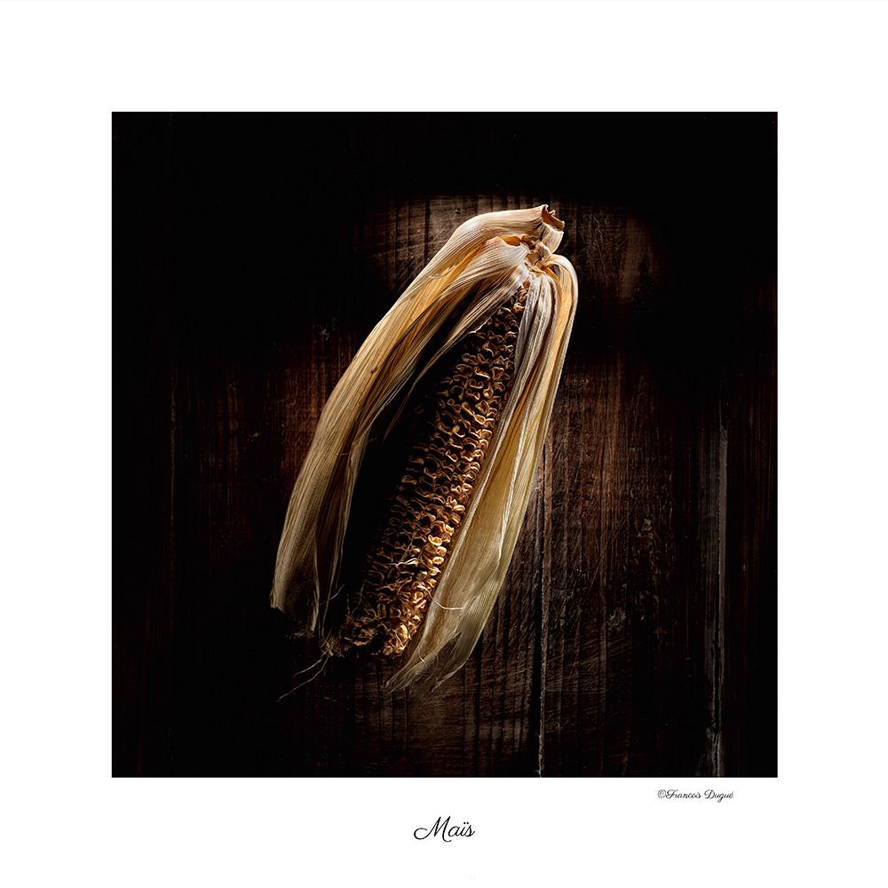 mais, maïs, nature mortes, francois dugue photographe, françois dugué photographe rouen, auteur photographe francois dugue, photographe publicitaire rouen